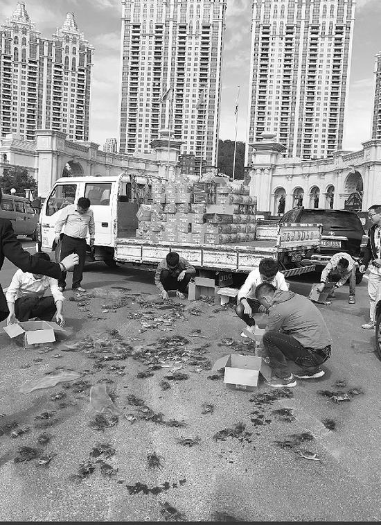 路过的市民在帮着车主捡螃蟹。半岛晨报、海力网摄影记者孙振芳