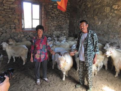 获赠33只羊,老两口笑逐颜开。