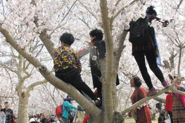 樱花园内市民不文明行为频现