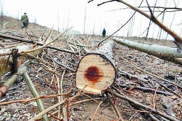 男子无证采伐127棵树获刑6个月