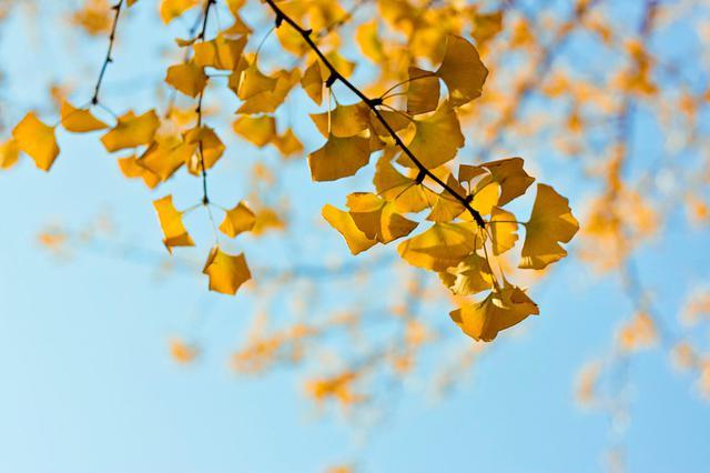 秋分至 天气微微凉