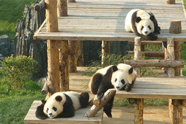 森林动物园接待游客近15万人次 创历史新高