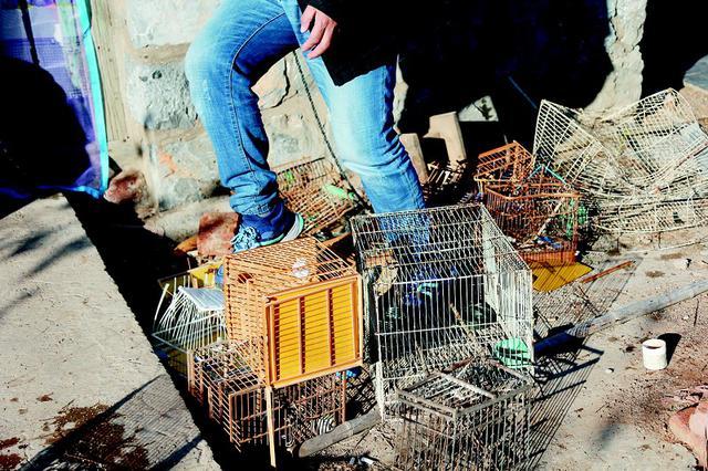 警民協作開展愛鳥救鳥行動