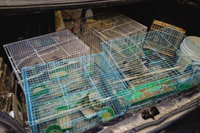 大连加强贩卖野生鸟类行为的打击力度