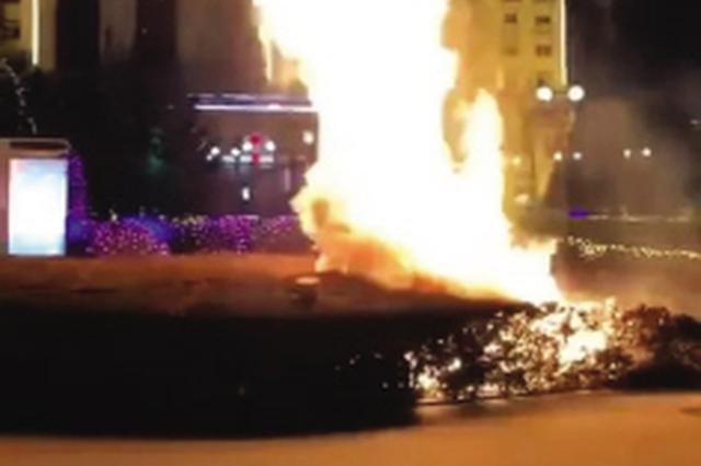小伙情人节求婚放焰火 不慎引燃景观灌木