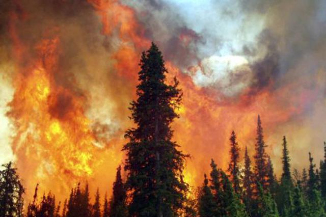 国网大连供电公司:空中巡逻 精准助力清明防山火