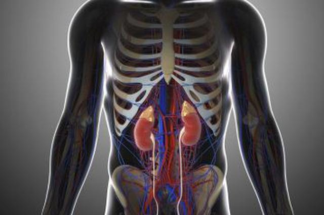 慢性肾脏病管理