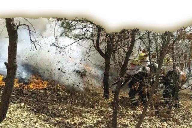 清明假期大连市48人野外用火被拘留
