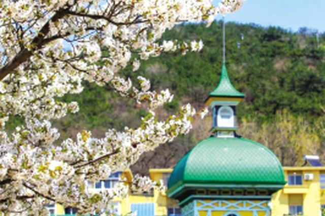 第十一届中国大连(旅顺)国际樱花节昨日芬芳启幕