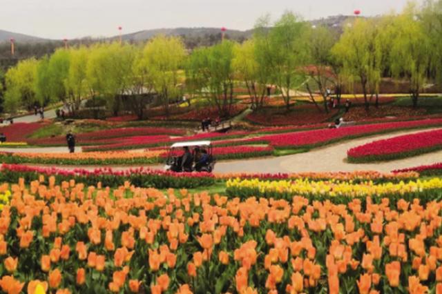 中荷球根花卉博览会在大连英歌石植物园启幕