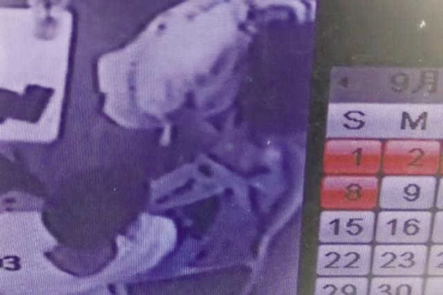 一对男女咖啡店内偷走价值15000元的猫