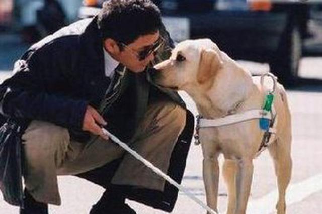 大连导盲犬将参加北京冬残奥会