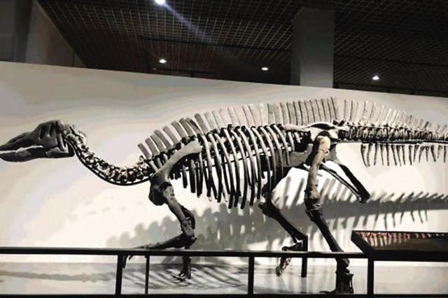 《远古的生命-中生代古生物化石展》在大连自然博物馆展出