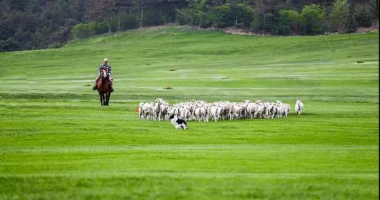 """""""风吹草低见牛羊""""的草原美景"""