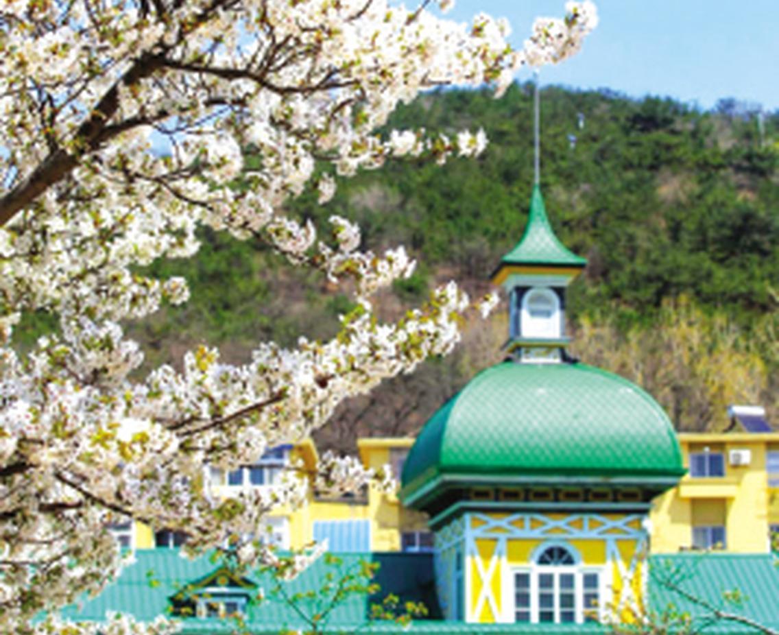 中国大连(旅顺)国际樱花节芬芳启幕