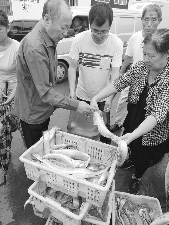 头网刀鱼价格合适,在前来采购的市民和小贩中最为抢手。