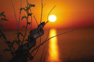蛇岛蝮蛇。