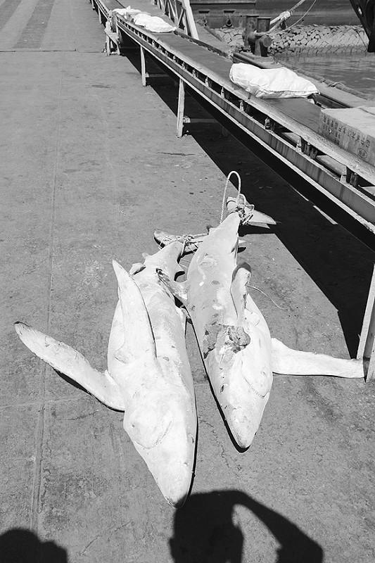 被查获的非法捕捞渔获物。
