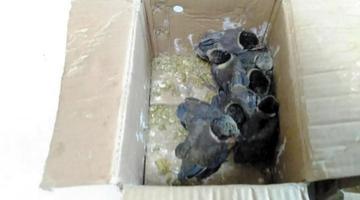 男子劳动公园门口贩卖野生鸟类