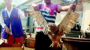 市民捡拾国家二级保护动物