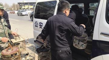 花卉店竟违法饲养13只野生鸟