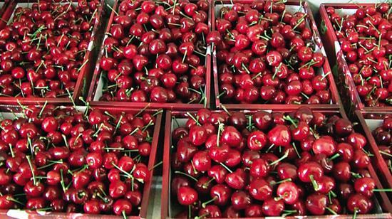 560箱大樱桃560箱大苹果送到546名天使手中