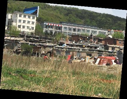 曾被拆除的违建依然屹立林地里。
