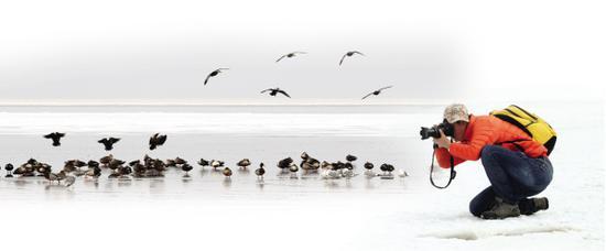 鸭为背景。