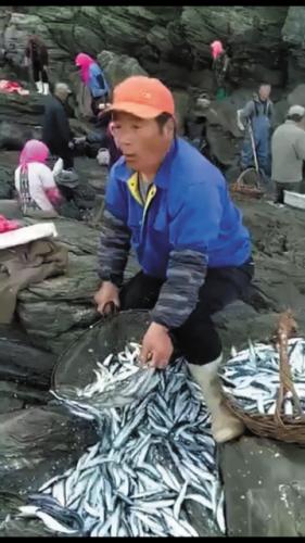 老百姓们舀的鱼是专青鱼。