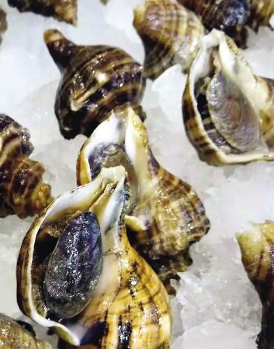 新鲜诱人的大海螺。图来源大连发布