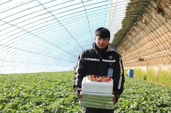 在草莓主产区,顺丰小哥多为本地人,既提供寄递服务,更能为家乡特产打CALL