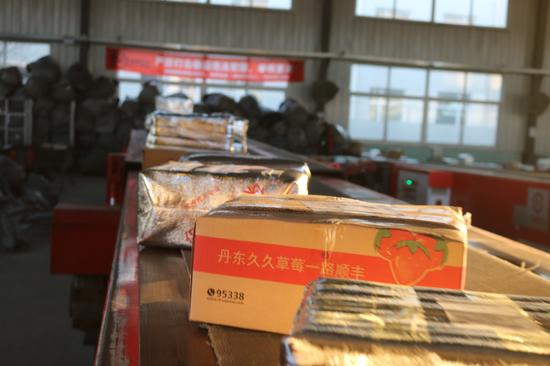 新鲜草莓通过传送带直达冷链车内部。