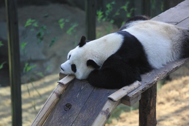 动物园里的动物们都是咋过冬