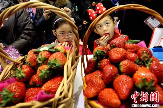 资料图:草莓。中新社记者 富田 摄