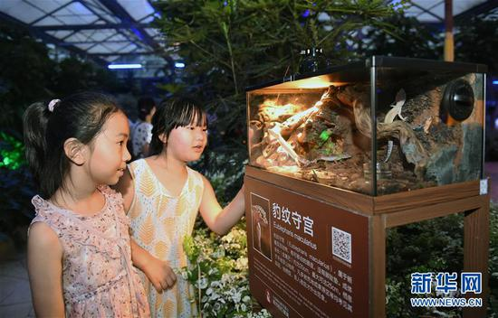 植物园会发光 小徐永钦很牛叉1朋友夏夜探寻神奇动物(图)