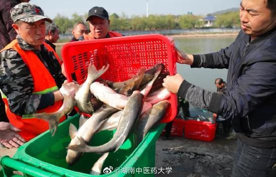 """长沙一高校捞三千余斤鱼给学生""""改善生活"""""""