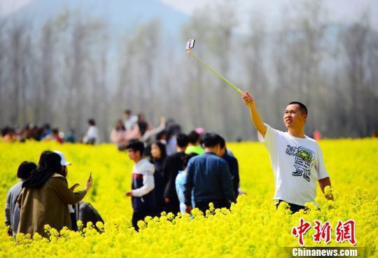 山东高校人间四月天 百花轮番争艳美如画卷(图)