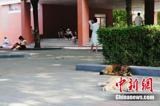 一旦走上考研路,你甚至会羡慕学校里的流浪狗。李丽 摄