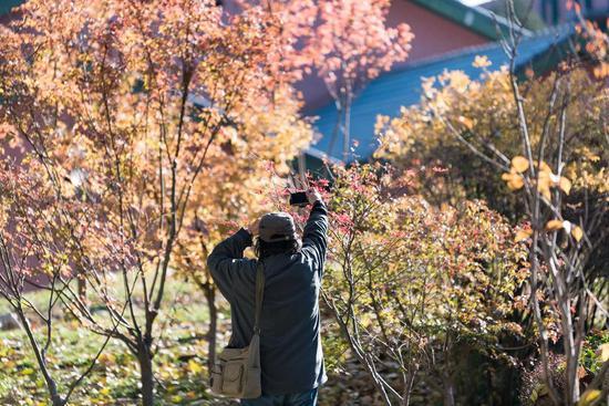 观秋景 以手机记录