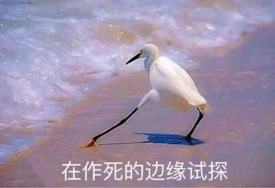 「在作死的边缘试探」流行语,其实来源于一个白鹭在海边试探的图片。