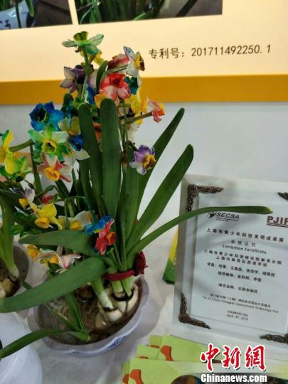 令人眼前一亮的五彩水仙花。 芊烨 摄