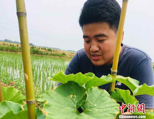 图为平东林检查农作物生长情况。 张文清 摄