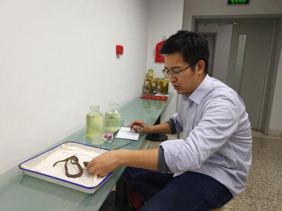 史静耸在中国科学院动物研究所查看标本。受访者供图