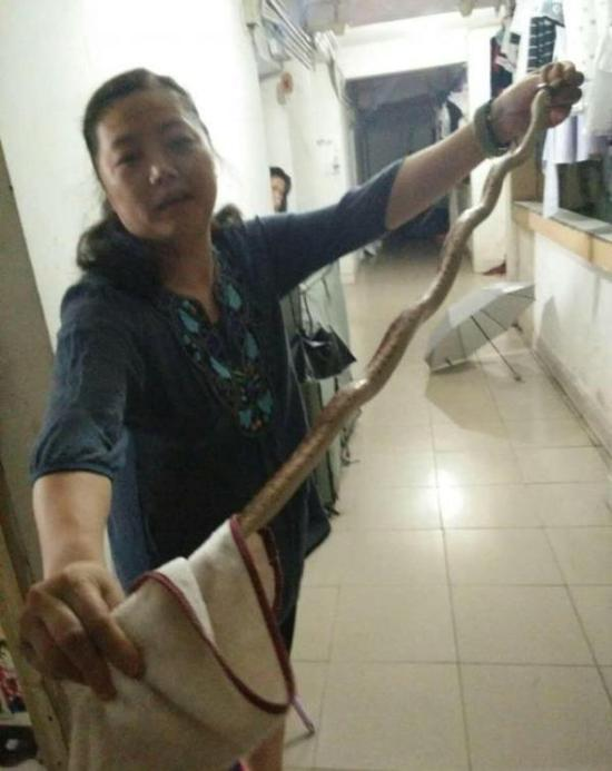 女教师徒手抓蛇。