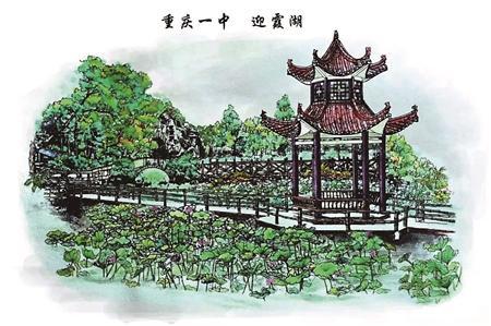 七色堇的手绘图
