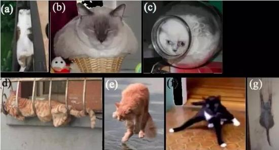 (图片来源:Marc-Antoine Fardin的论文《On the rheology of cats 》)