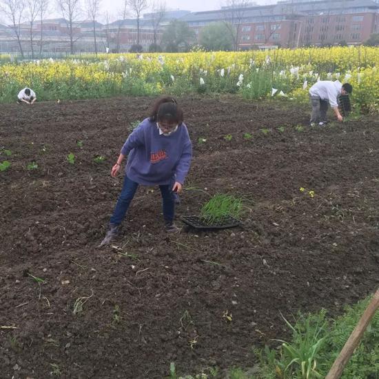 同学们在田间劳作