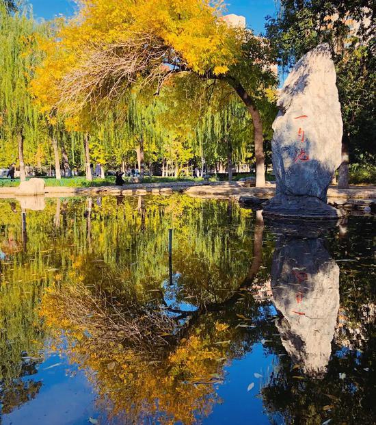 池水明如镜 照谁枯荣影