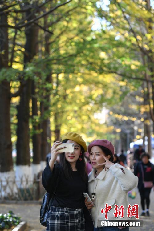 两位女士在云南大学银杏道上留影