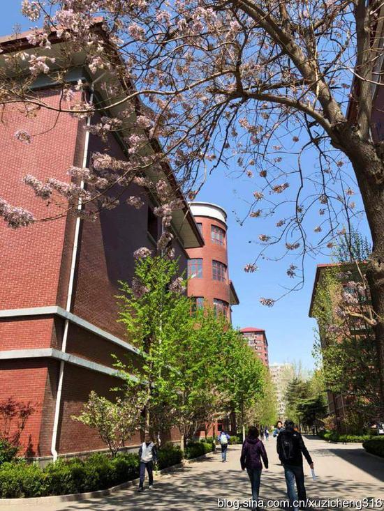 繁花似锦的季节里,十一校园就是个大花园
